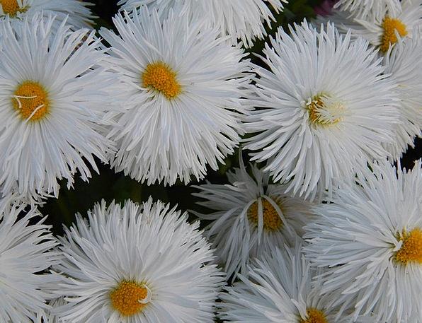 White Snowy Landscapes Floret Nature Nature Countr