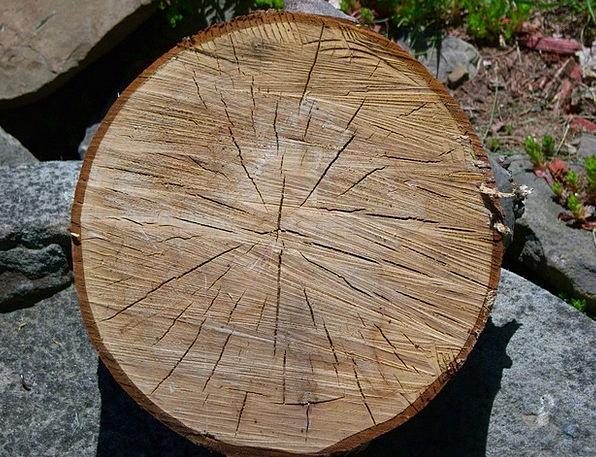 Oak Landscapes Sapling Nature Slice Share Tree Old