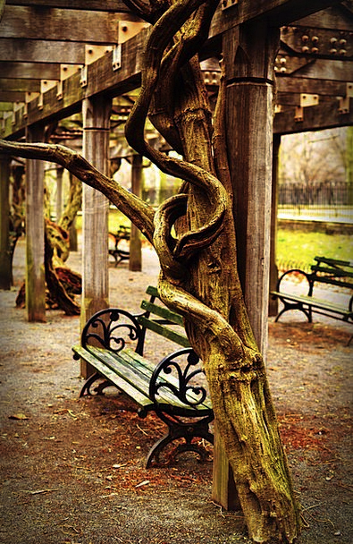 Bench Seat Buildings Architecture Nyc Central Park