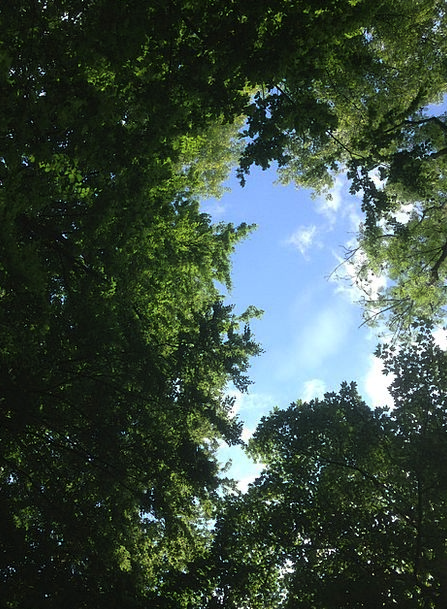 Forest Glade Landscapes Woodland Nature Canopy Awn