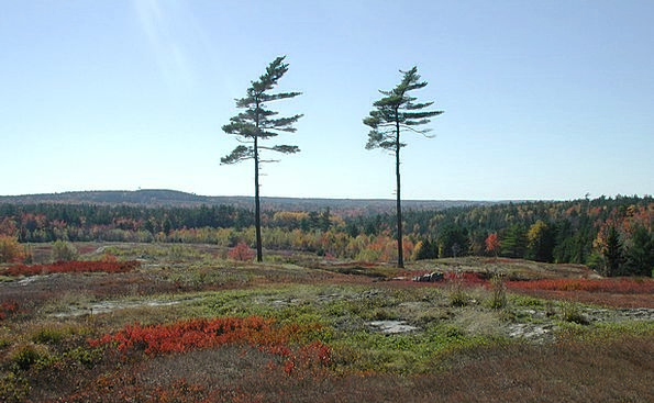 New England Landscapes Nature Forest Woodland Pine
