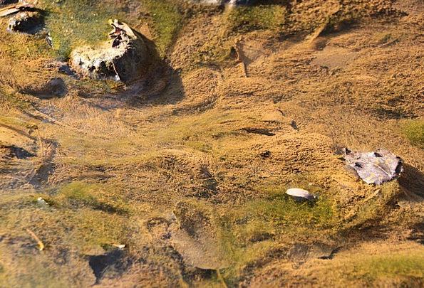 Algae Landscapes Lime Nature River Stream Green Un