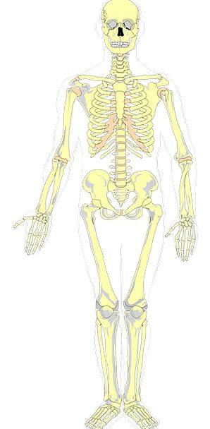 Bones, Frames, Medical, Hue, Health, Anatomy, Structure, Color ...