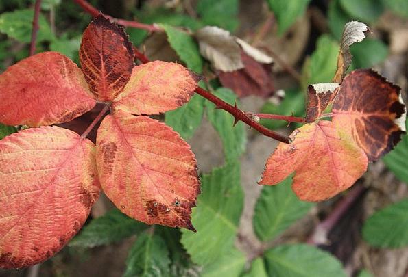 Leaves Greeneries Fall Fall Foliage Autumn Colorfu