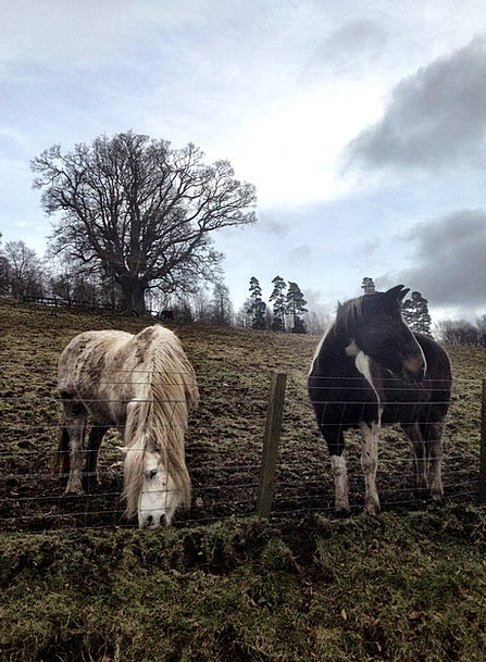 Horses Cattle Landscapes Arena Nature Nature Count
