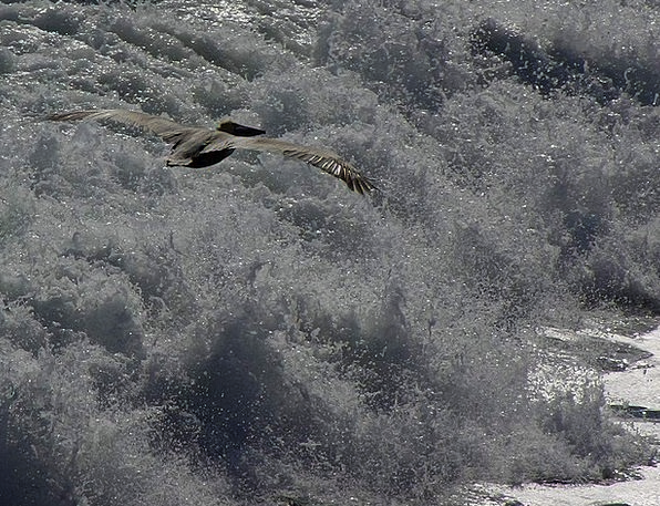 Pelikan Landscapes Upsurge Nature Glide Slither Wa