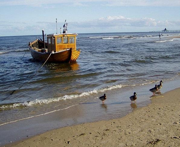 Baltic Sea Marine Fishing Boat Sea Ducks Dears Duc