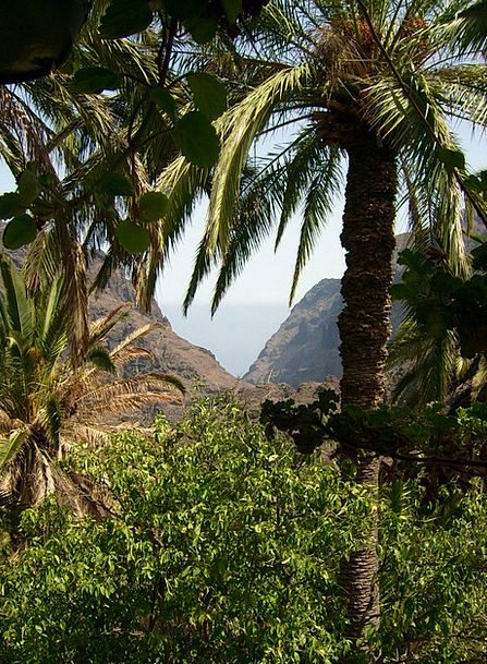 Tenerife Landscapes Countryside Nature Canary Isla