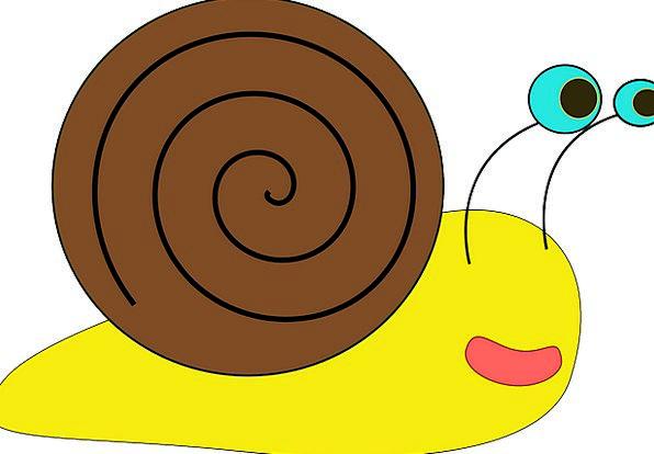 Snail Gastropod Mollusk Slow Sluggish Cute Spiral