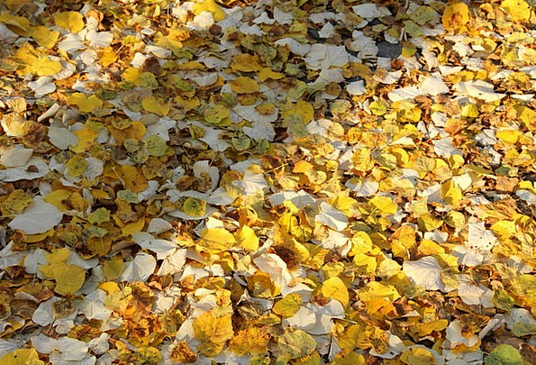 Autumn Fall Greeneries Ground Crushed Leaves