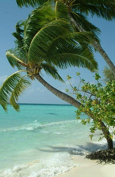 Palma Vacation Travel Beach Seashore Maldives