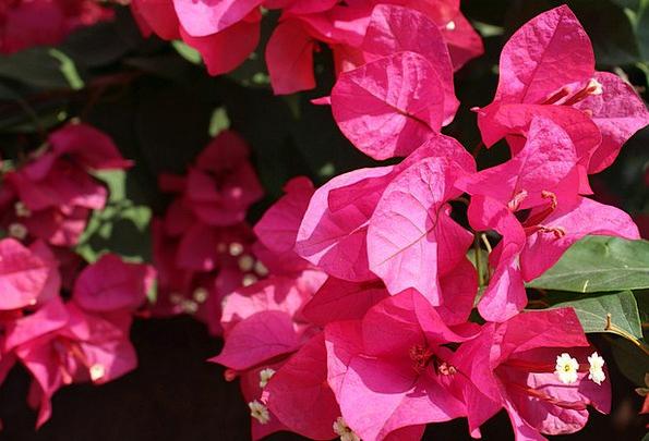 Plant Vegetable Landscapes Floret Nature Azaleas F
