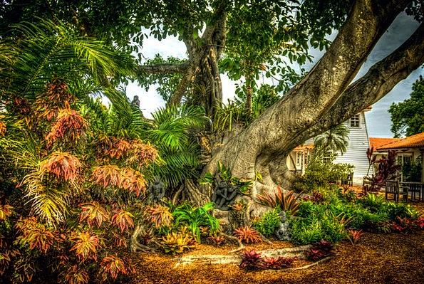 Banyan Tree Landscapes Nature Shangri-La South Flo