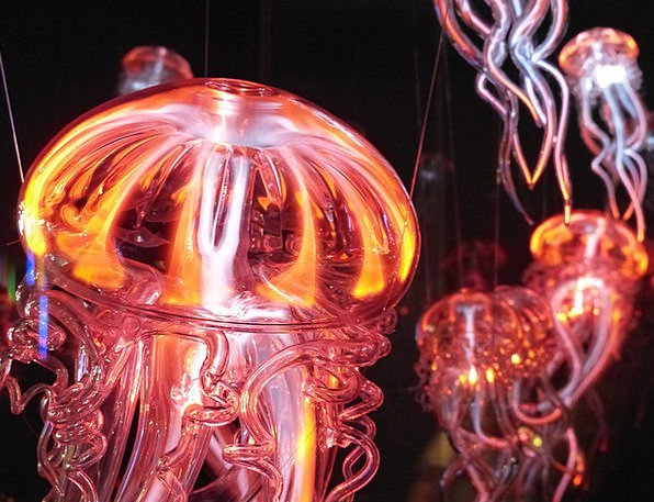 Jellyfish Light Bright Luminous Jellyfish Light Ph