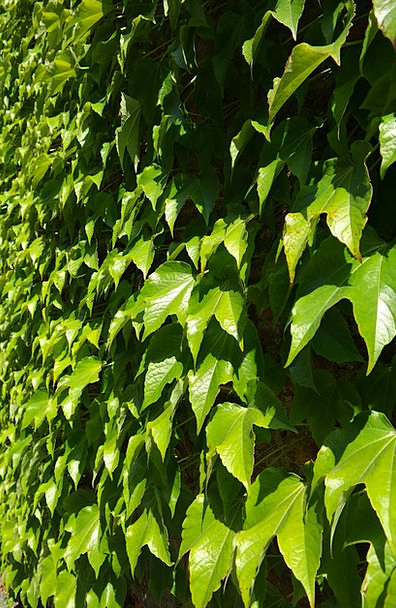 Leaves Greeneries Wall Partition Greening Wine Par