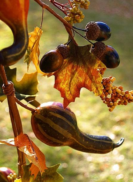 Decorative Gourd Squash Squeeze Pumpkin Plants Cur