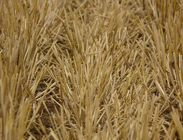 Glean Garner Growth Harvest Crop Stubble Cereals M