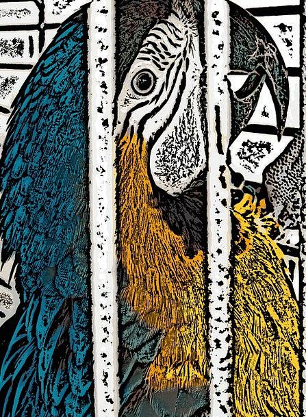 Digital Art Imitator Bird Fowl Parrot Caged Captiv