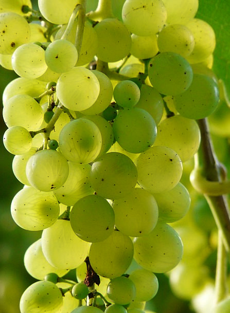 Grapes Landscapes Mauve Nature Plant Vegetable Win