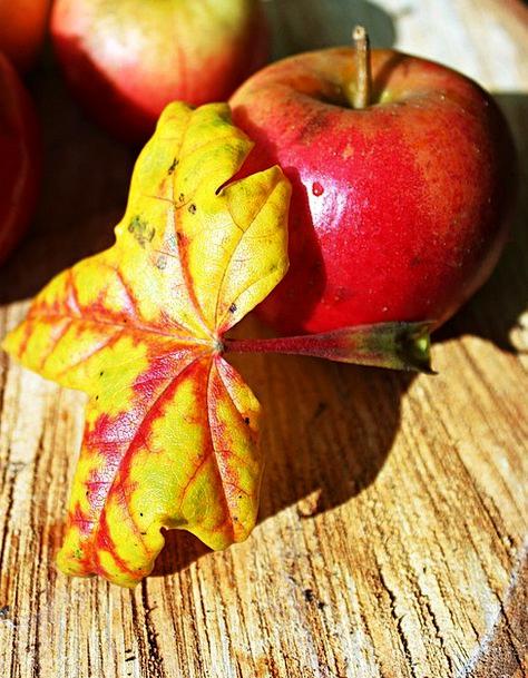 Autumn Leaf Landscapes Nature Red Bloodshot Apple