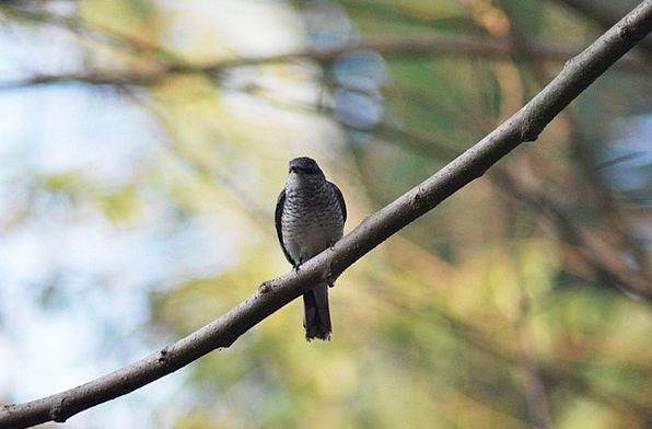 Bird Fowl Warmonger Perching Resting Hawk Branch D