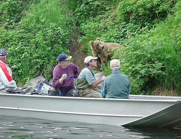 Alaska Landscapes Angling Nature Bear Tolerate Fis