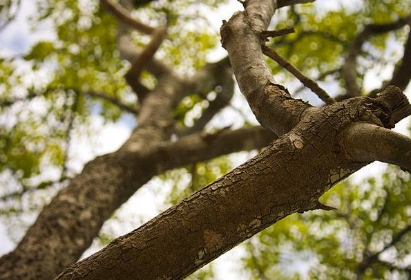Branch Division Landscapes Sapling Nature Nature C