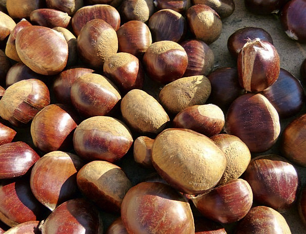 Chestnuts Anecdotes Drink Food Fruits Ovaries Swee