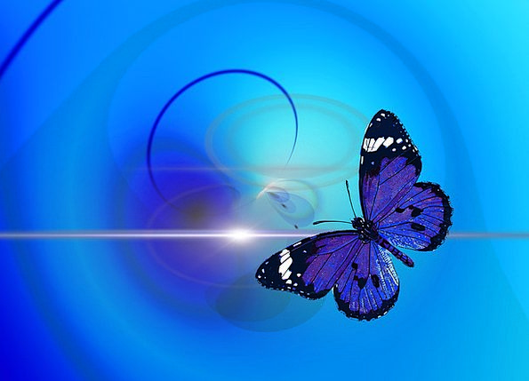 Butterfly Physical Insect Bug Animal Circle Abstra