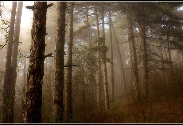 Trees Plants Landscapes Mist Nature Forest Woodlan