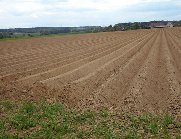 Ridge Edge Ackerfurchen Arable Earth Soil Cultivat