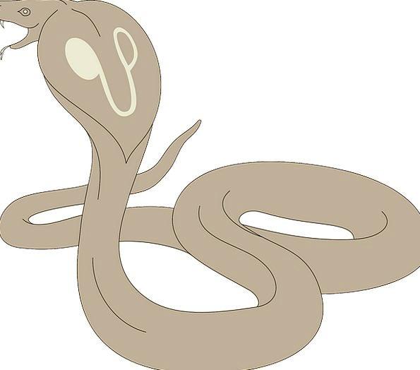 Snake Serpent Head Skull Cobra Brown Chocolate Fre
