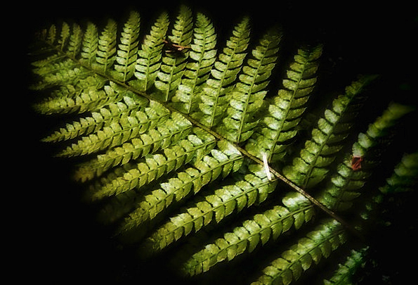 Fern Landscapes Vegetable Nature Forest Woodland P