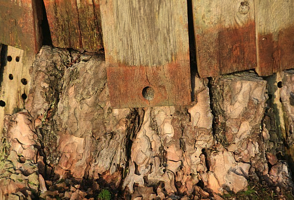 Wood Timber Panels Stump Base Boards Holes Fleabag