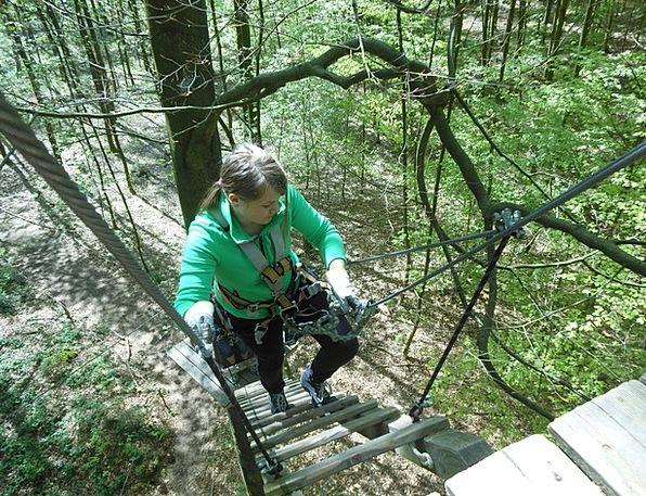 Climbing Forest Trees Plants Aachen High Hobby Pas