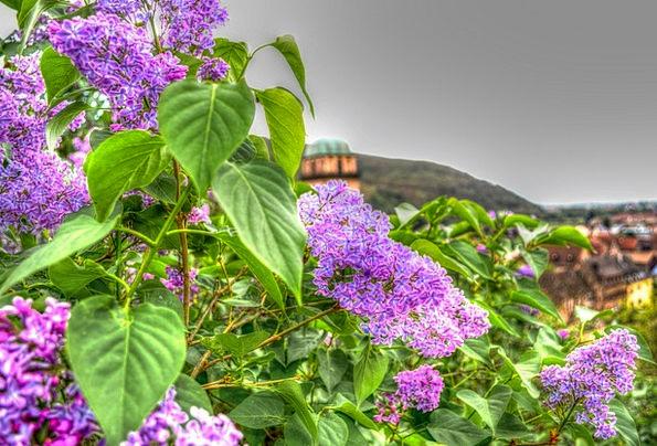 Flowers Plants Landscapes Vegetable Nature Nature