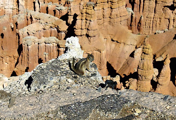 Ground Squirrel Physical Rocks Pillars Animal Natu