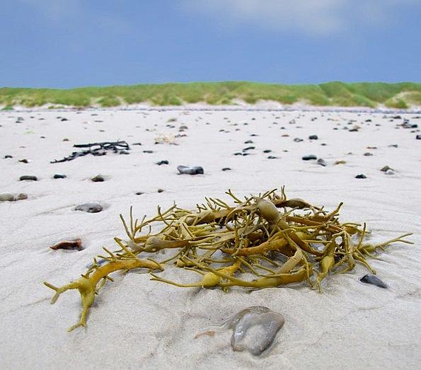 Seaweed Vacation Travel Water Algae North Sea Beac