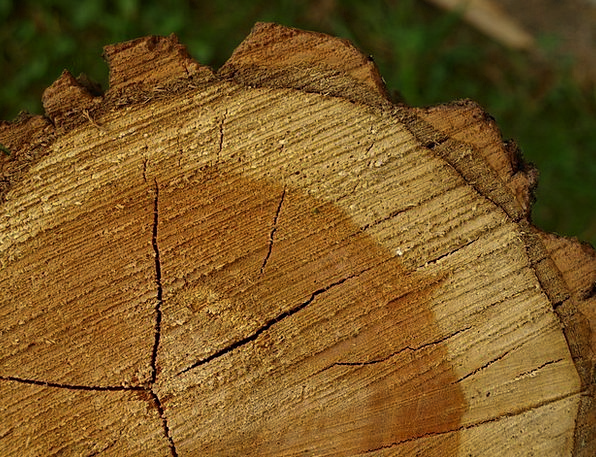 Tree Grates Tree Bark Tree Stumps Annual Rings