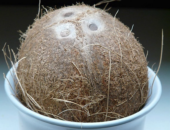 Coconut Drink Food Coconuts Germ Holes Eat Exotic