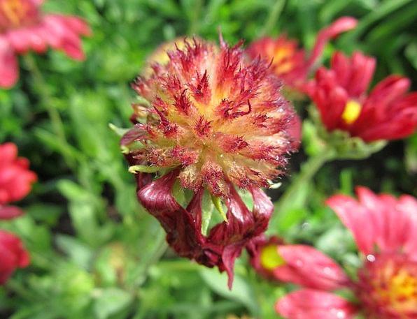 Plant Vegetable Landscapes Floret Nature Nature Co