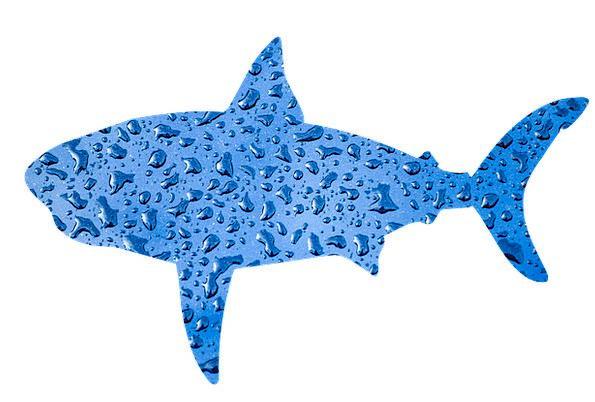 Shark Swindler Angle Animal Physical Fish Water Aq