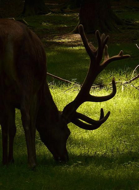 Red Deer Animal Physical Hirsch Cervidae Antler Ho