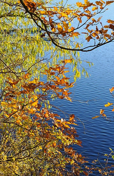 Trees Plants Periodical Autumn Fall Journal Water