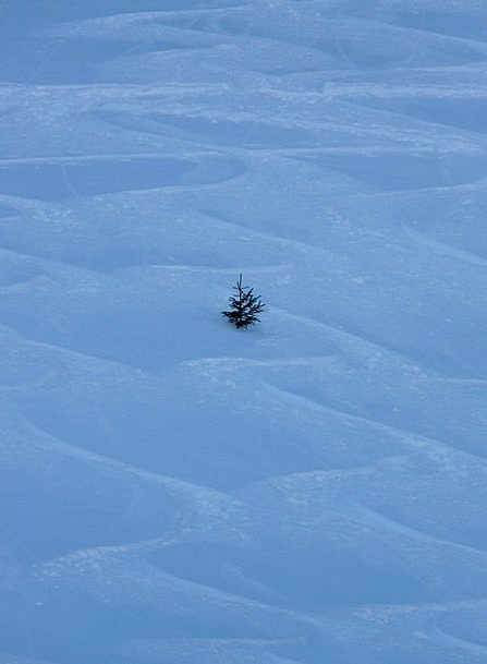 Fir Sapling Wintry Chilly Tree Leave Winter Season