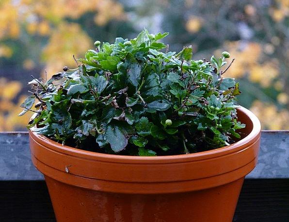 Wet Landscapes Nature Plant Vegetable Blumenstock