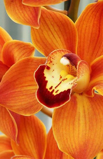 Beautiful Lovely Blossom Bloom Petal Close-Up Deta