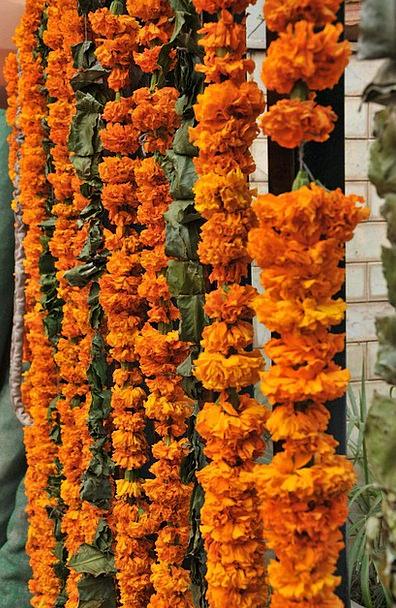 Flowers Plants Wreath Decoration Beautification Garland Indian