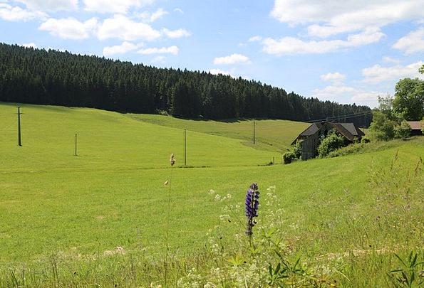 Black Forest Landscapes Vale Nature Landscape Scen