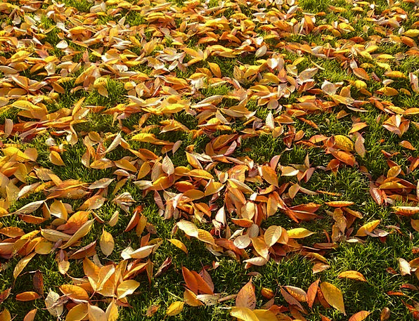 Cherry Sheets Greeneries Autumn Fall Leaves Meadow